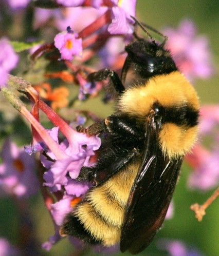 How to plant for native pollinators in Texas