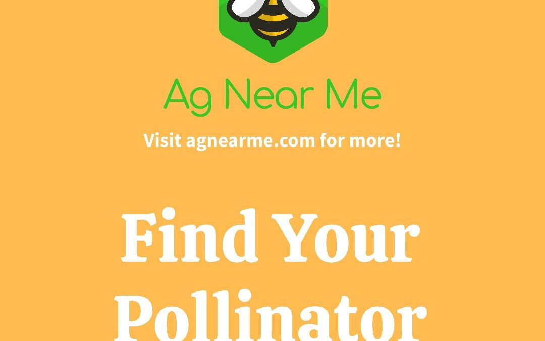 Pollinator Personality Test