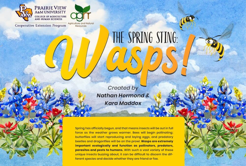 Spring Wasp Guide