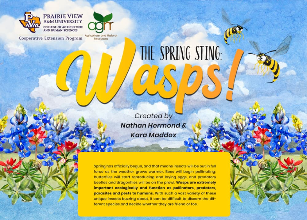 2021 Spring Wasp Guide